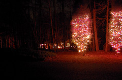 outdoor tree lights